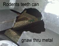 gnawed_aluminum