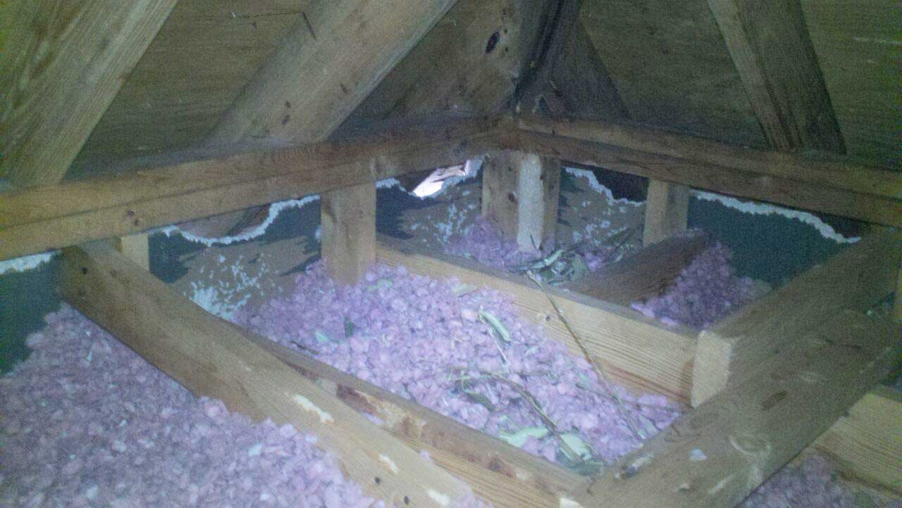 squirrel-insulation-sheetrock