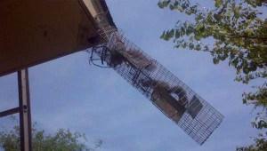 rooftop squirrel trap