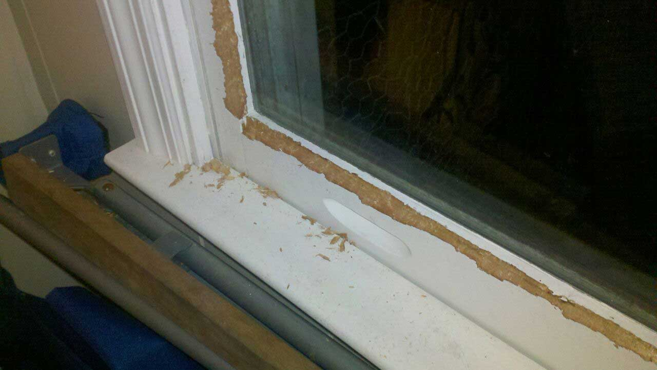 squirrel-window-damage